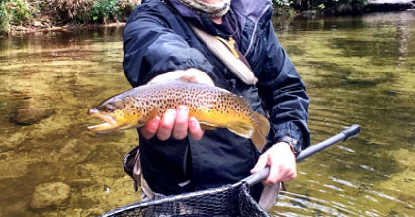Western north carolina edition author at coastal angler for Wilson river fishing report