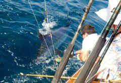 Golfito Marlin Fishing
