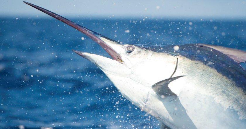 Maverick Yachts Fishing Forecast