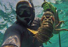 treasure-coast-lobster