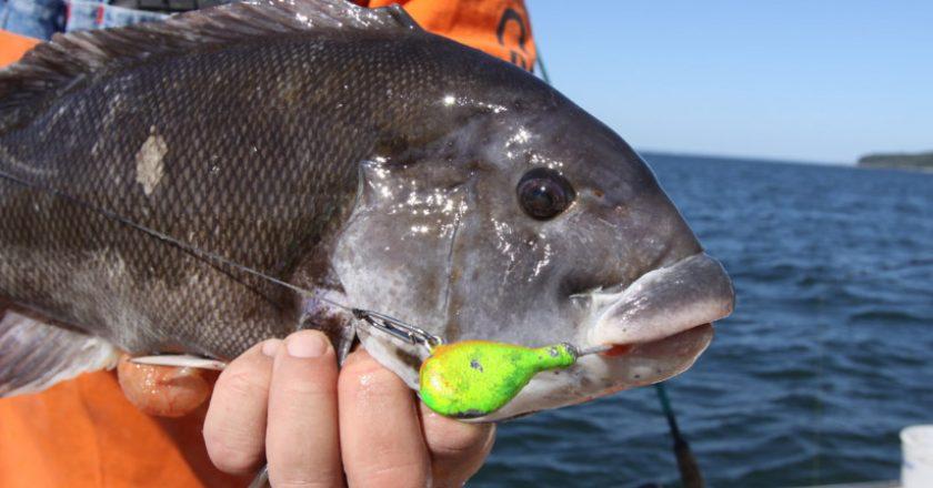 blackfishing