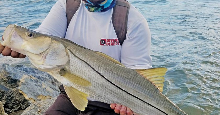 Chris Pascual caught this snook off Dania Beach with a live pilchard.