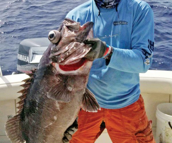 Bob Kalbaugh caught this 50 pound wreckfish while deep dropping in 950 feet off Fort Lauderdale.