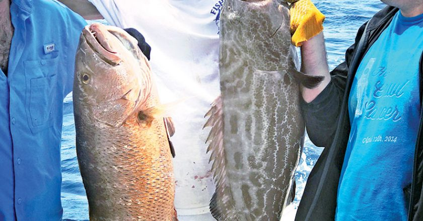 Big cubera snapper and black grouper caught aboard the New Lattitude.