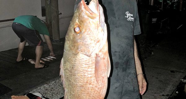Howard Goldberg caught this slob mangrove on the night trip aboard Catch My Drift.