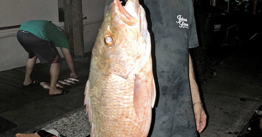 Howard Goldberg caught this slob mangrove on the night trip aboard Catch My Drift.