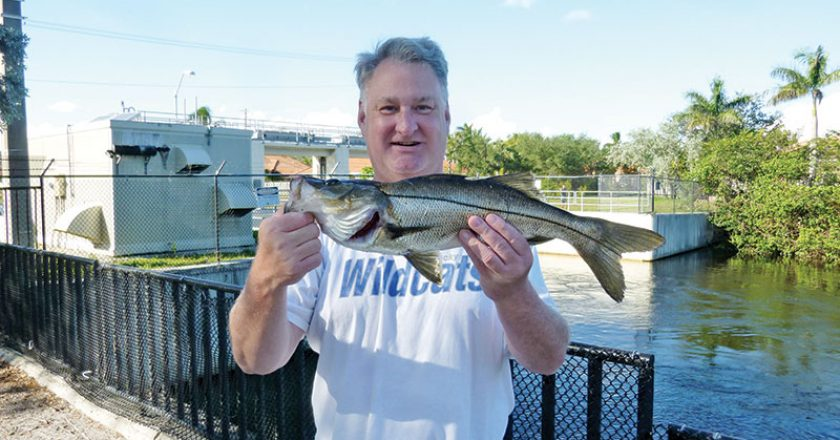Mark Finch with freshwater snook caught on a live shiner at the Sewell lock in Davie.
