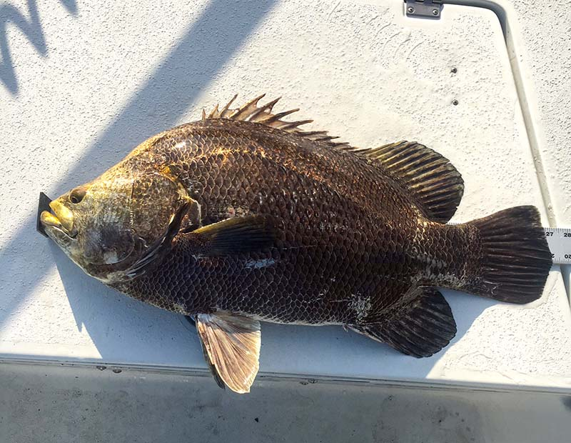 Stuart jensen beach inshore fishing report and forecast for What fish are biting this time of year