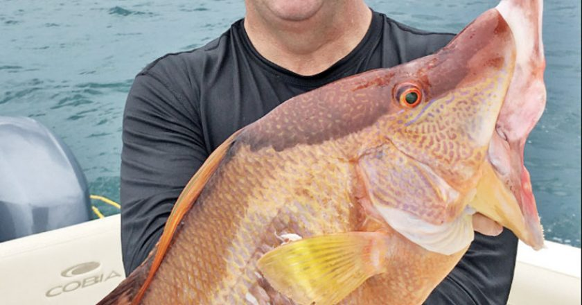 Loyal reader Jorge Millares shot this hogfish while spearfishing in 30 feet of water.