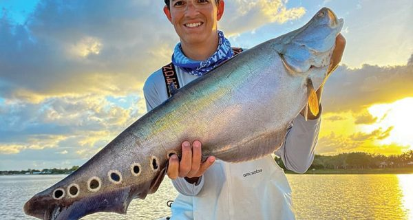 Capt. Johnny with a solid clown knifefish caught on a freshly netted live shad.