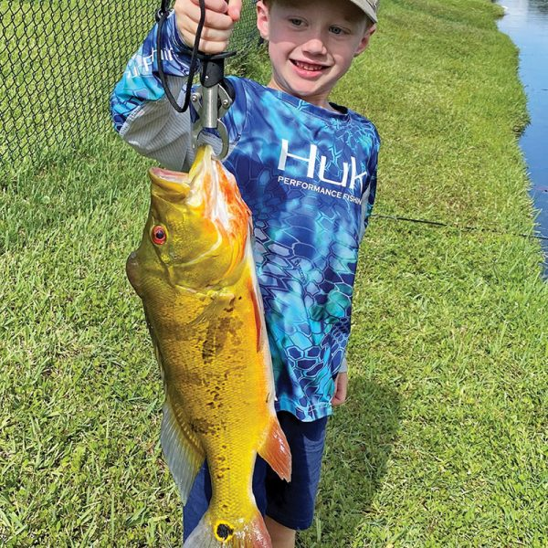 Six year old Michael Stevens scored a stud peacock bass on a live shiner.