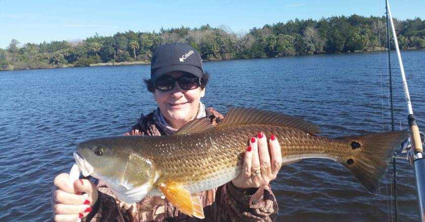 Panacea fishing reports archives coastal angler the for Big bend fishing report