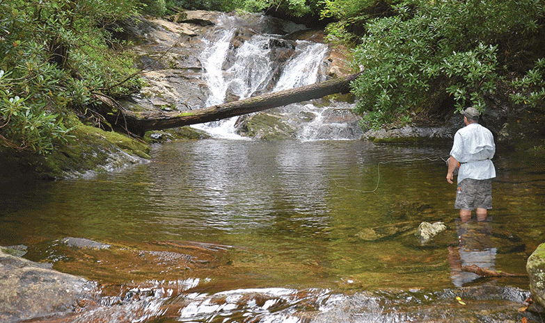 Wild trout on the east fork pigeon river n c coastal for Eastern fly fishing magazine