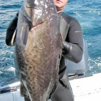 Drock Zezas speared this hefty grouper.