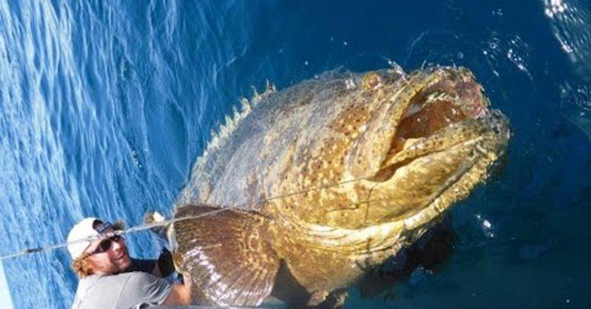 Fishin 39 Franks Author At Coastal Angler The Angler Magazine