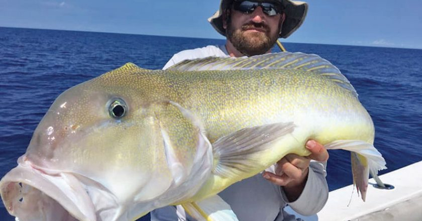Deep dropping trip produced golden tilefish.