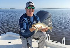 Smaller top water plugs like this 8 cm Rapala Skitter Walk often fool speckled chunks like this one Capt. Jim Ross caught in the Banana River Lagoon.