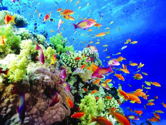 Arrecifes Coralinos Coastal Angler Amp The Angler Magazine