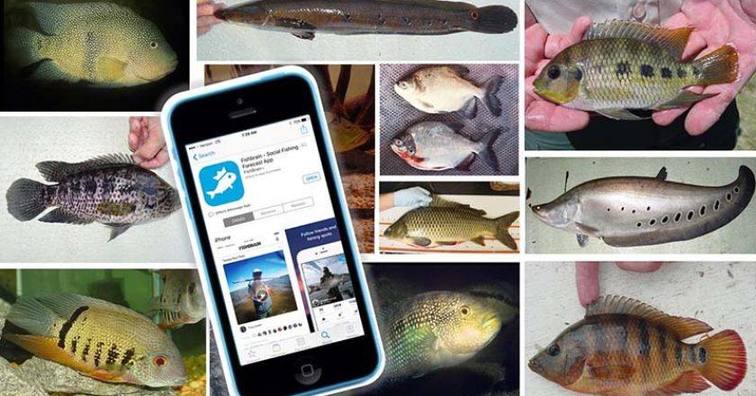 Treasure Coast Florida Fish And Wildlife Conservation
