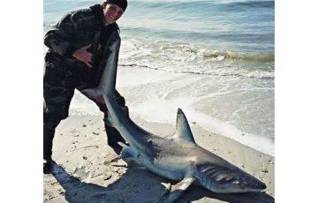 shark adventures