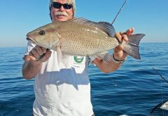 Capt. Chester Reese showing off a fine gray snapper