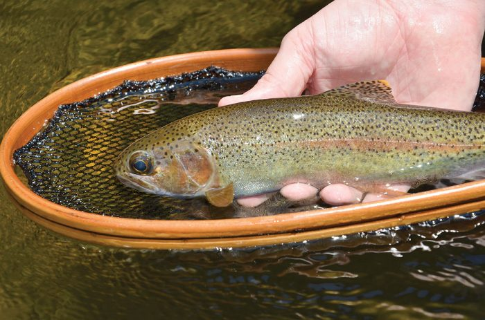 Maryland conducts pre season trout stocking coastal for Trout fishing maryland