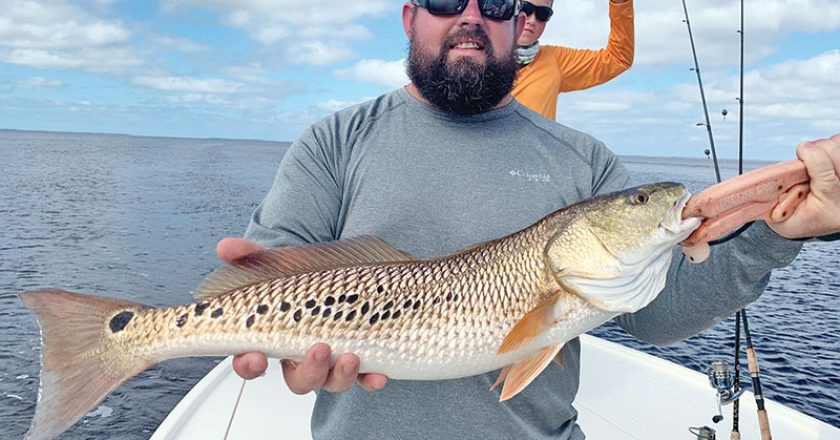 Daniel, here form Alabama, with a cool multi-spotted redfish he caught in St. Joe Bay fishing with Capt. Jordan Todd
