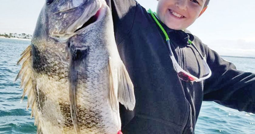 Evan Mixon did a great job carefully pulling this monster sheepshead up to the Adrenaline boat on light spinning gear.