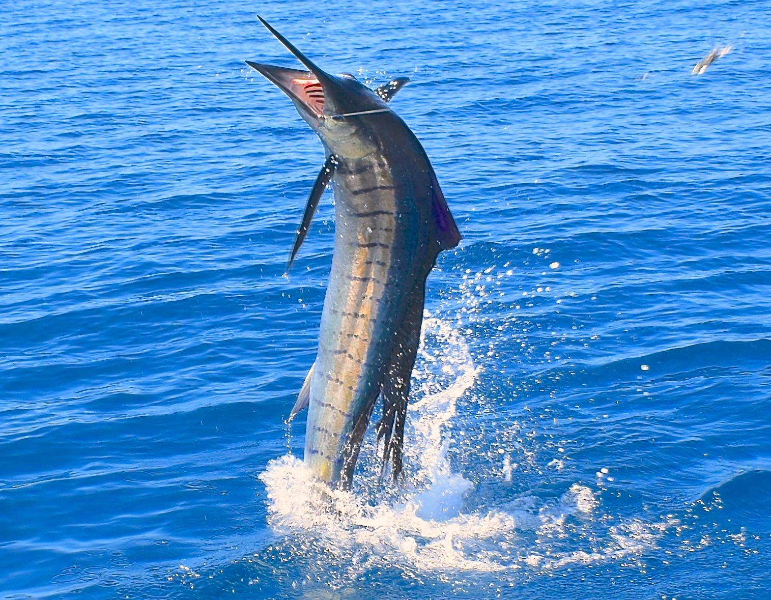 Fishing For A Giant Sailfish In Costa Rica Coastal