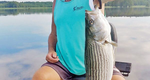 Guide JR with a nice striper caught topwater fishing for largemouth bass. Explosive & fun.