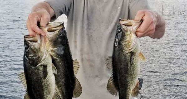 Myles Gardner caught 35 bass with fishtallahasse guide service during Christmas break.