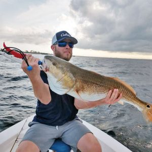 Nathan snatching on bull reds.