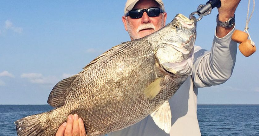 Robinson Brothers guides are sackin' up tons of big tripletail.