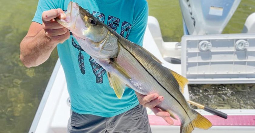 Ryan from TN caught & released this snook aboard Reel Rosie Inshore Charters in St. Andrews Bay. A rare find in these parts.