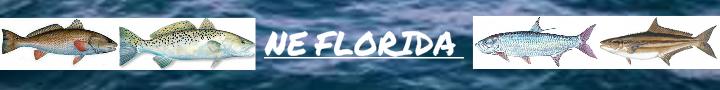 ne-florida