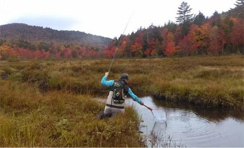 Upstate ny angler fly fishing coastal angler the for Adirondack fly fishing