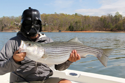 Even Darth Vader loves stripers!