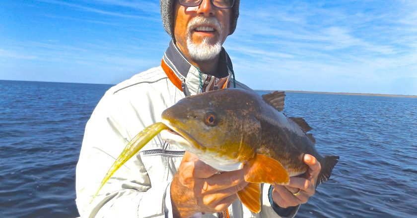 Keaton beach fishing reports archives coastal angler for Big bend fishing