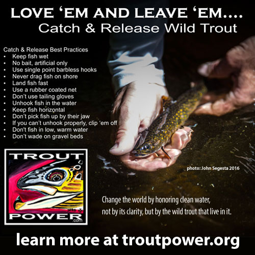 Trout Power Initiative