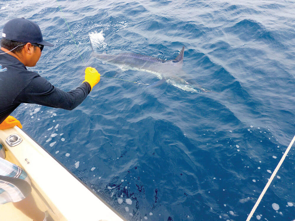Marlin Fishing In The Virgin Islands