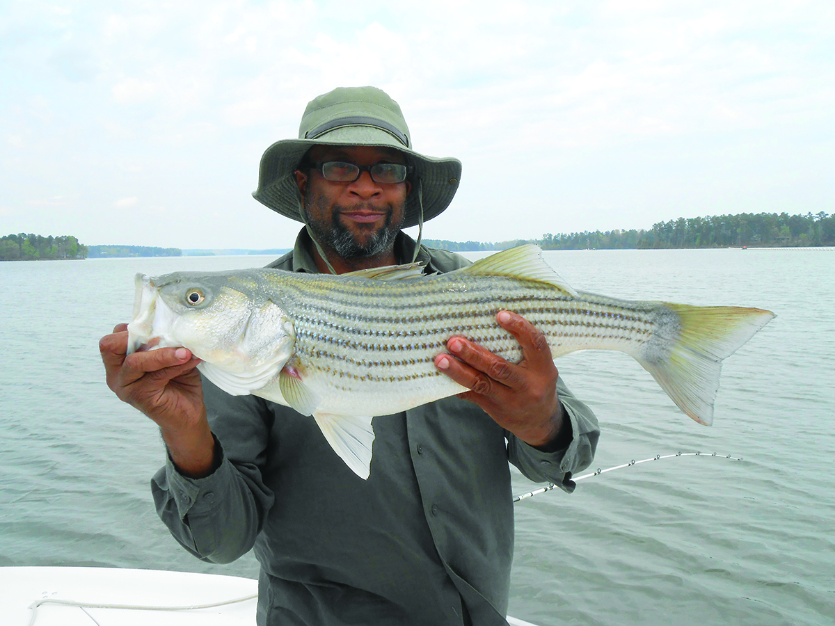 pat griffin caught this big striper on lake oconee