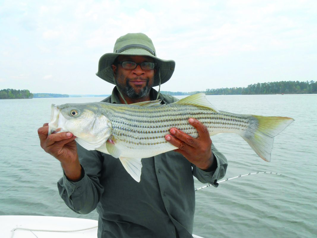 Pat griffin caught this big striper coastal angler the for Lake sinclair fishing