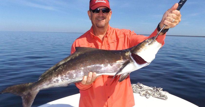 Big Bend Edition Author At Coastal Angler The Angler
