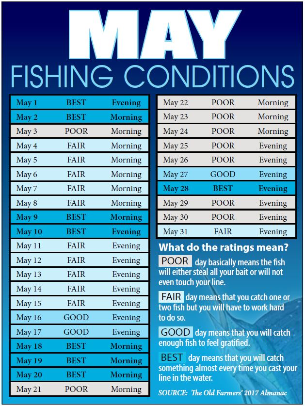 Bahamas fishing reports forecasts news articles for Fishing forecast calendar