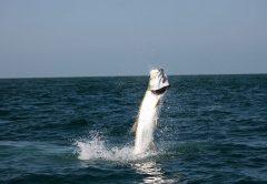 Tips for Tarpon Fishing