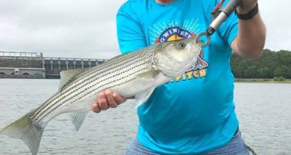Coastal angler magazine myrtle beach edition coastal for Myrtle beach fishing report