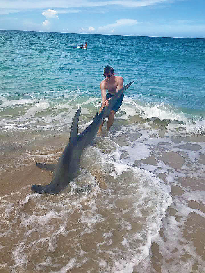 Surf angler lands enormous hammerhead coastal angler for Surf fishing panama city beach