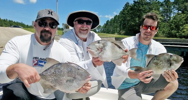The Peevy clan haulin triggerfish.