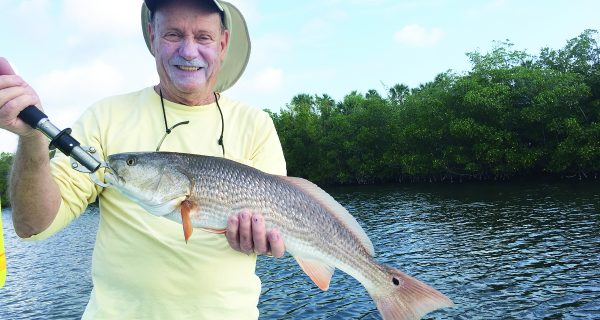 Redfish are one of the species angles can expect to catch when fishing near mangroves this month.