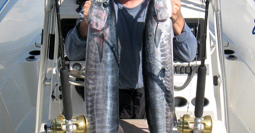 Boynton To Boca Fishing Reports Archives Coastal Angler